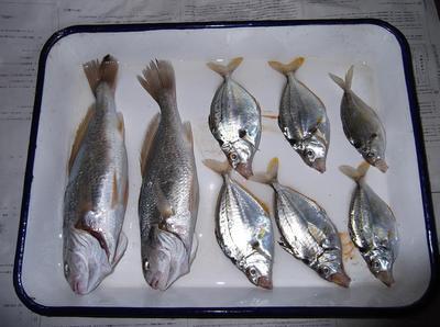 シロキス釣り 01401.jpg