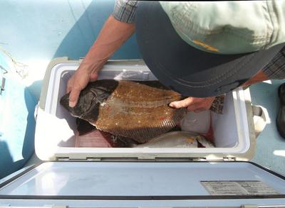 ヒラメ釣り 00401.jpg