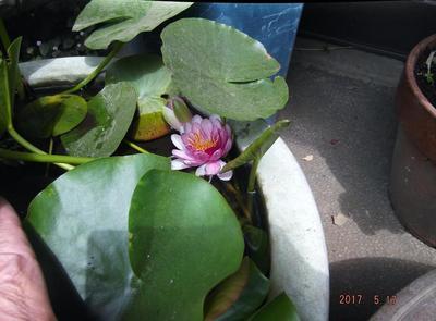 庭の花 00201.jpg