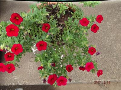 庭の花 00401.jpg