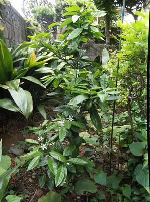庭の花 00501.jpg