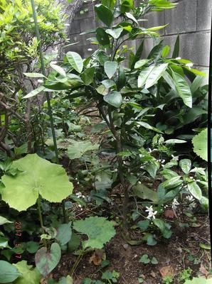 庭の花 01001.jpg
