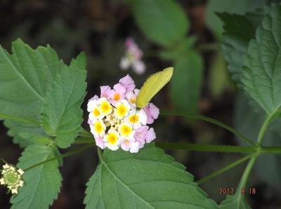 庭の花 01301.jpg