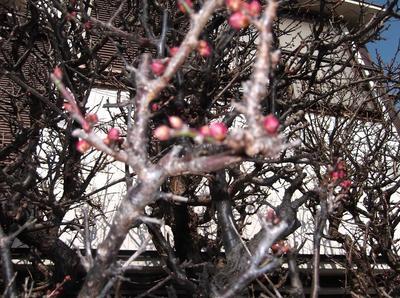 春がくる 00101.jpg