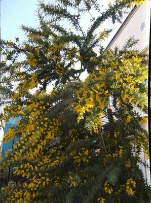 春4 00201.jpg