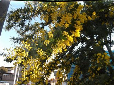 春4 00701.jpg