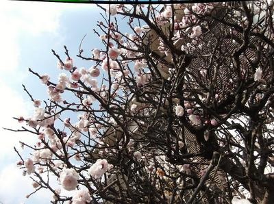 春6 00101.jpg