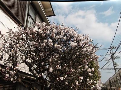 春6 00201.jpg