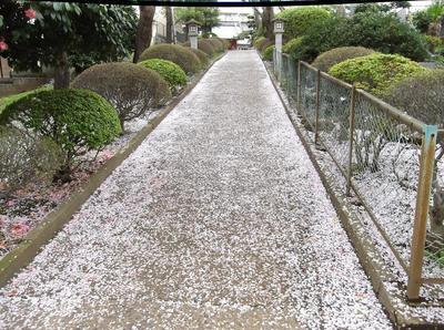 歩こう会4月 02301.jpg