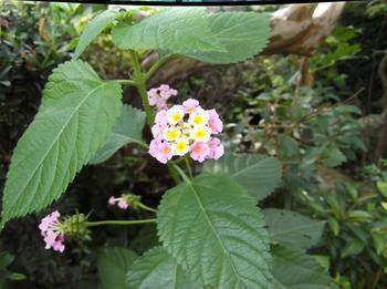 花と下見 01501.jpg
