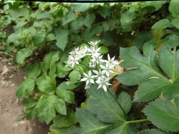 花と下見 02101.jpg