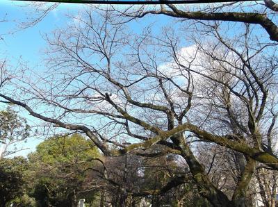 開花1 01601.jpg
