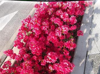 5月の花木 00501.jpg