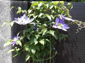 5月の花木 01001.jpg