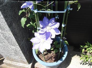 5月の花木 01101.jpg