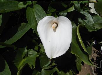 5月の花木 02101.jpg