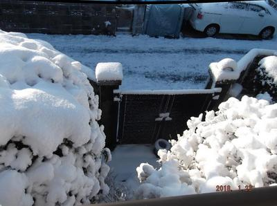 初雪 00701.jpg