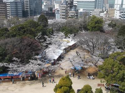 千葉公園 01201.jpg