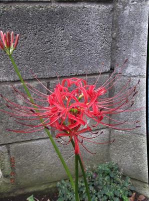 庭の花 002.JPG