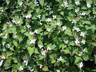 春自然ウオーク 01701.jpg
