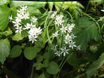 花と下見 02401.jpg