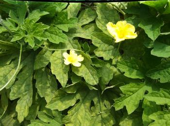 花と下見 02501.jpg