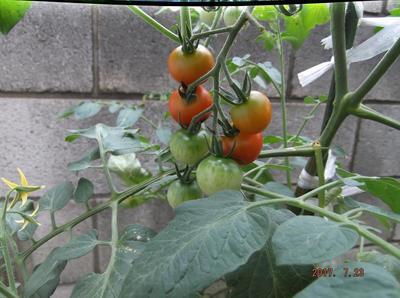 菜園 01201.jpg