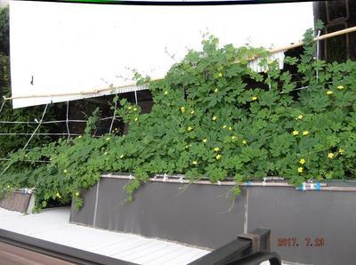 菜園 01501.jpg
