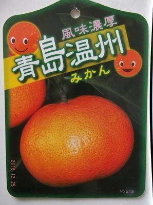 青島温州 01801.jpg
